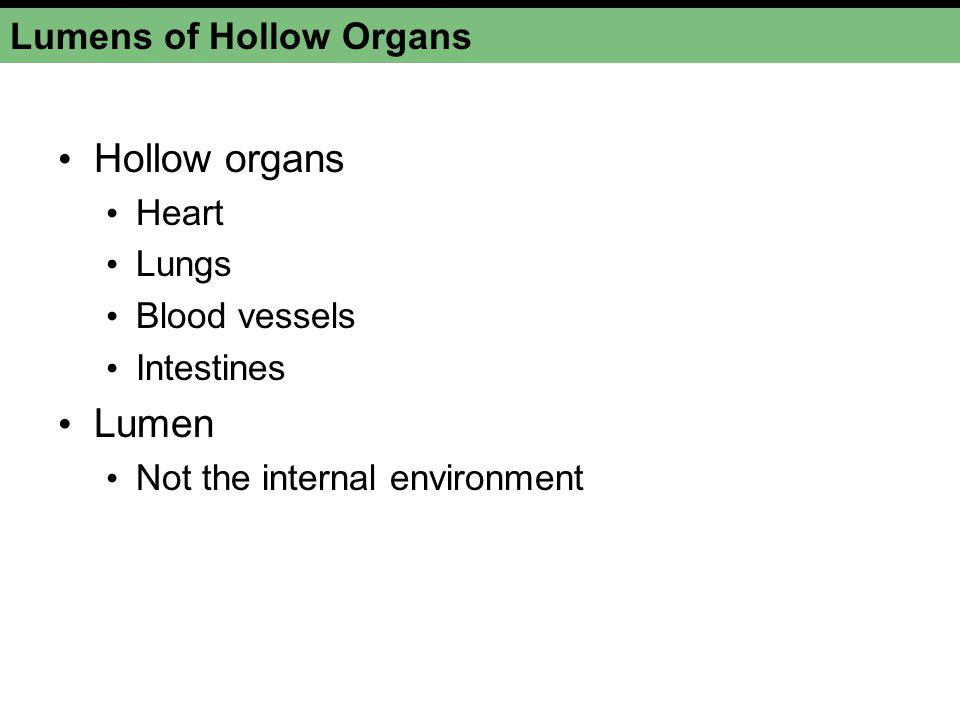 Lumens of Hollow Organs Hollow organs Heart Lungs Blood vessels Intestines Lumen Not the internal environment