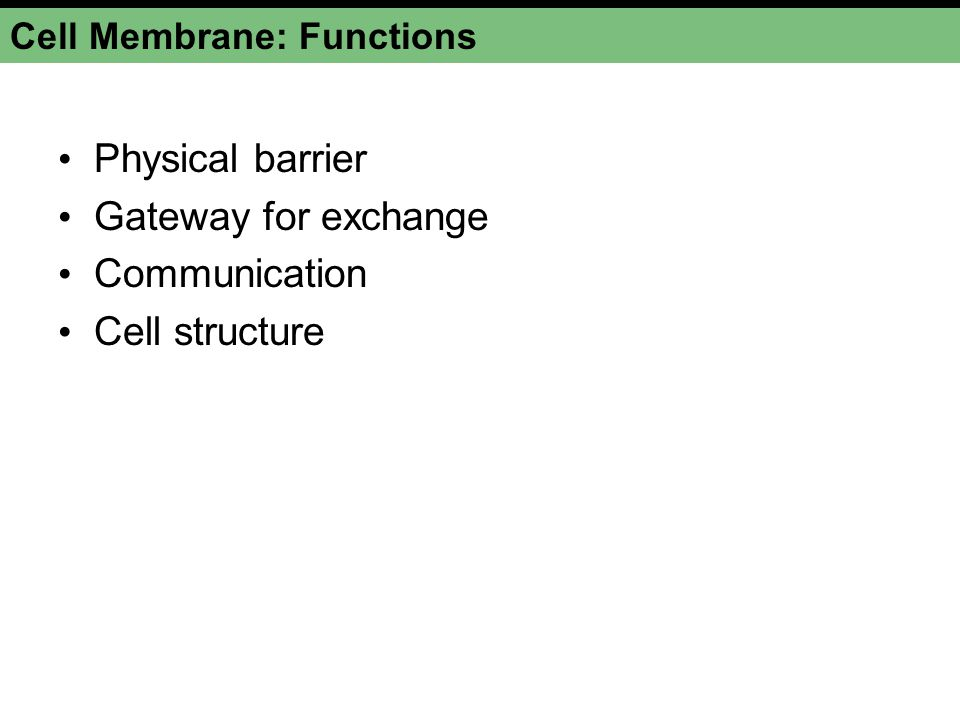 Cell Membrane: Functions Physical barrier Gateway for exchange Communication Cell structure