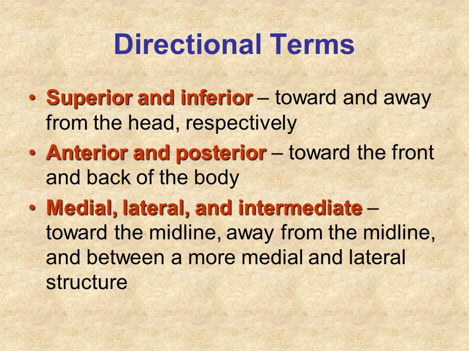 Directional Terms Superior and inferiorSuperior and inferior – toward and away from the head, respectively Anterior and posteriorAnterior and posterio