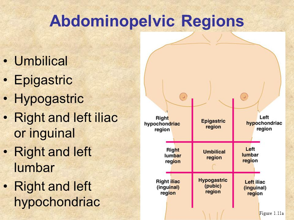 Abdominopelvic Regions Umbilical Epigastric Hypogastric Right and left iliac or inguinal Right and left lumbar Right and left hypochondriac Figure 1.1