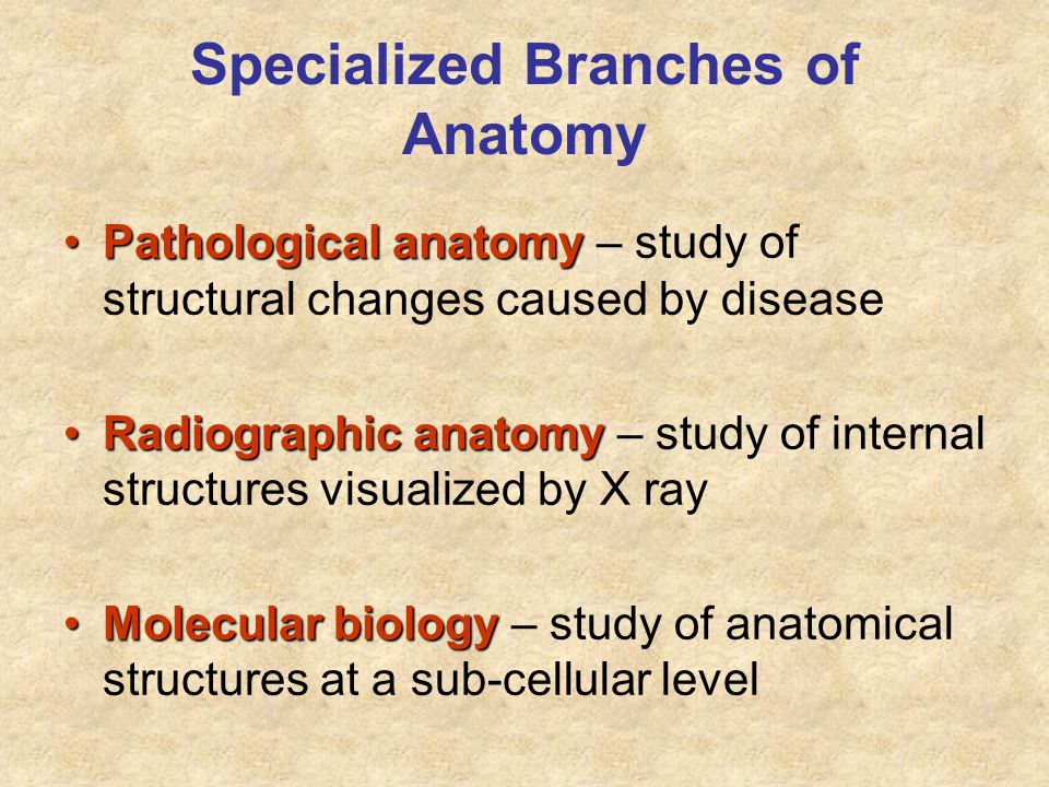 Specialized Branches of Anatomy Pathological anatomyPathological anatomy – study of structural changes caused by disease Radiographic anatomyRadiograp