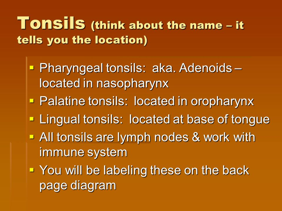 Tonsils (think about the name – it tells you the location)  Pharyngeal tonsils: aka. Adenoids – located in nasopharynx  Palatine tonsils: located in