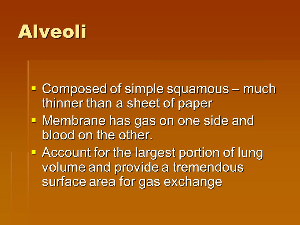 Alveoli  Composed of simple squamous – much thinner than a sheet of paper  Membrane has gas on one side and blood on the other.  Account for the la