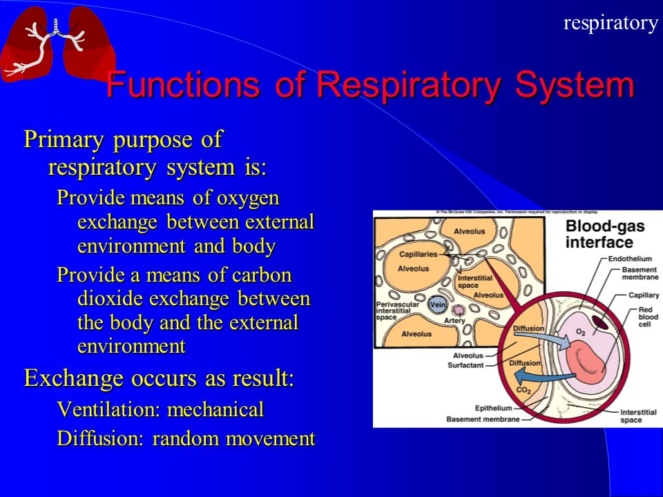 respiratory Functions of Respiratory System Primary purpose of respiratory system is: Provide means of oxygen exchange between external environment an