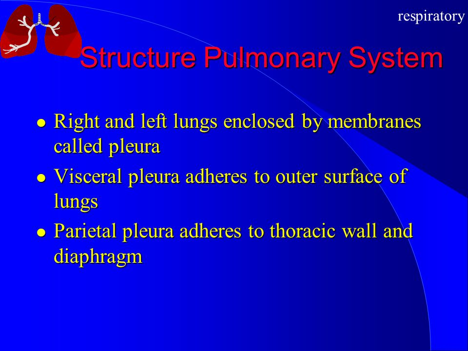 respiratory Structure Pulmonary System Right and left lungs enclosed by membranes called pleura Right and left lungs enclosed by membranes called pleu