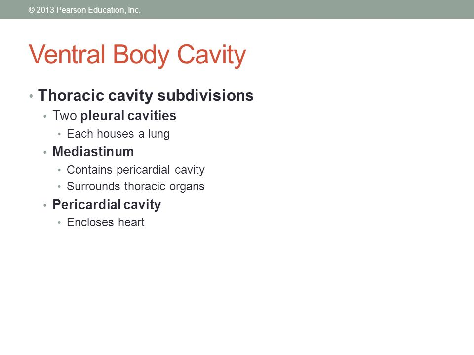 Abdominopelvic Cavity  Abdominopelvic cavity lies below the diaphragm  It is further divided into..