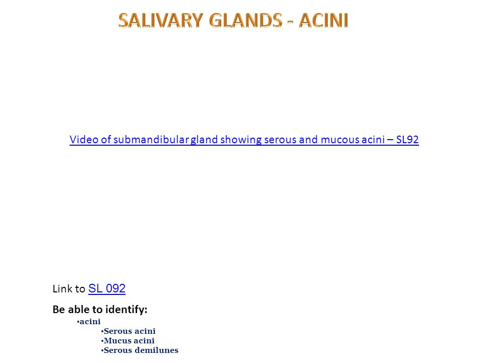 Video of submandibular gland showing serous and mucous acini – SL92 Link to SL 092 SL 092 Be able to identify: acini Serous acini Mucus acini Serous demilunes