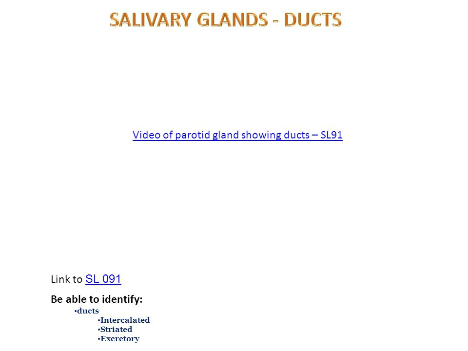 Video of parotid gland showing ducts – SL91 Link to SL 091 SL 091 Be able to identify: ducts Intercalated Striated Excretory