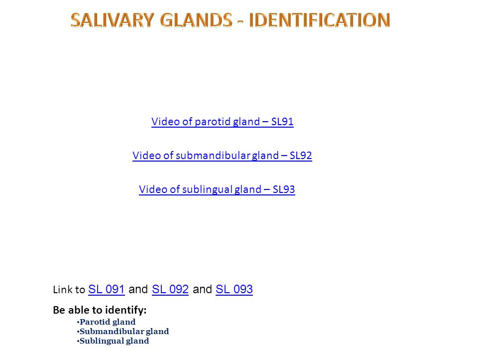 Video of parotid gland – SL91 Link to SL 091 and SL 092 and SL 093 SL 091SL 092SL 093 Be able to identify: Parotid gland Submandibular gland Sublingual gland Video of submandibular gland – SL92 Video of sublingual gland – SL93