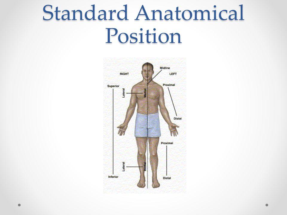 Standard Anatomical Position