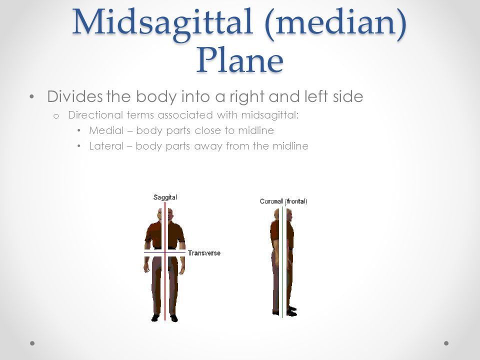 Midsagittal (median) Plane Divides the body into a right and left side o Directional terms associated with midsagittal: Medial – body parts close to m