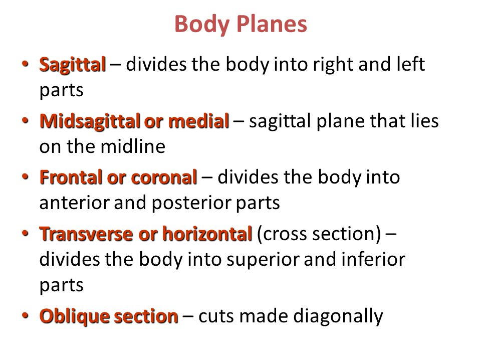 Body Planes Sagittal Sagittal – divides the body into right and left parts Midsagittal or medial Midsagittal or medial – sagittal plane that lies on the midline Frontal or coronal Frontal or coronal – divides the body into anterior and posterior parts Transverse or horizontal Transverse or horizontal (cross section) – divides the body into superior and inferior parts Oblique section Oblique section – cuts made diagonally