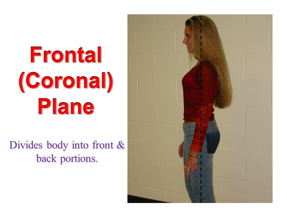 Frontal (Coronal) Plane Divides body into front & back portions.