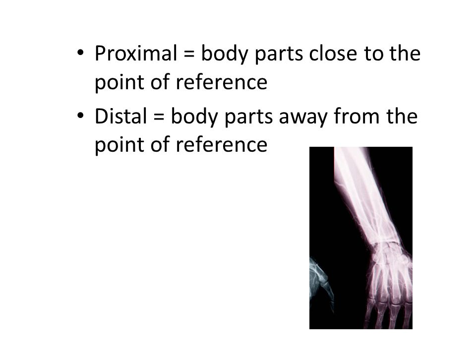 Proximal = body parts close to the point of reference Distal = body parts away from the point of reference