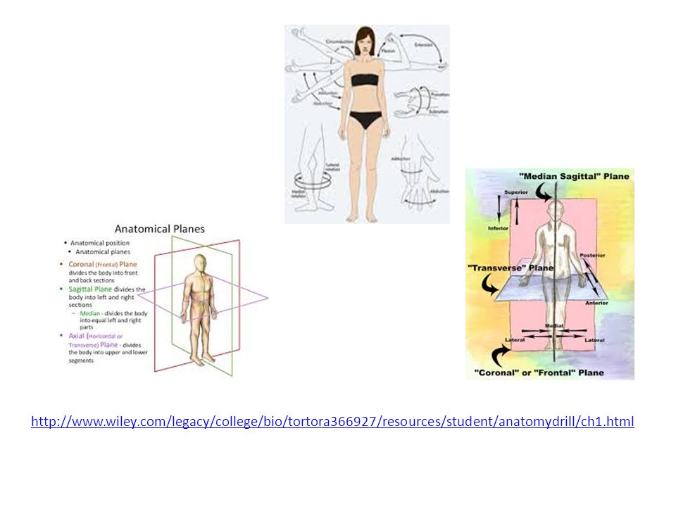 http://www.wiley.com/legacy/college/bio/tortora366927/resources/student/anatomydrill/ch1.html