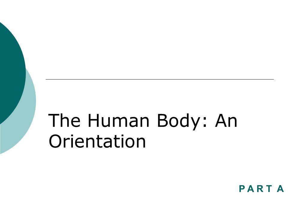 The Human Body: An Orientation P A R T A
