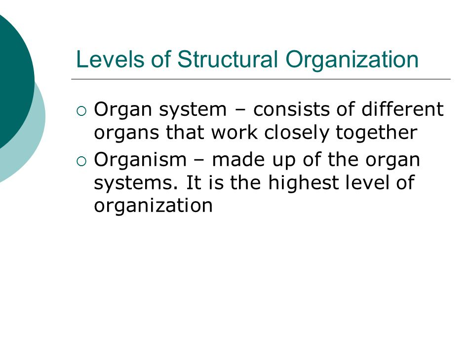 Levels of Structural Organization  Organ system – consists of different organs that work closely together  Organism – made up of the organ systems.