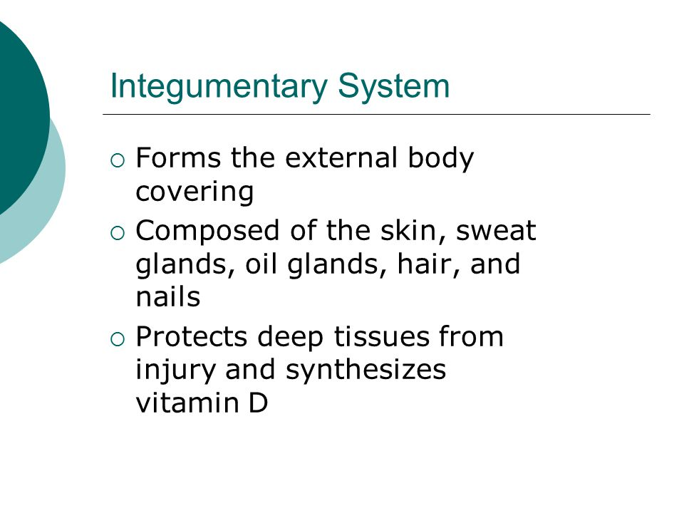 Integumentary System  Forms the external body covering  Composed of the skin, sweat glands, oil glands, hair, and nails  Protects deep tissues from injury and synthesizes vitamin D