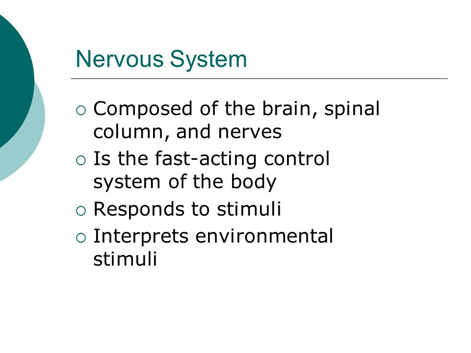 Nervous System  Composed of the brain, spinal column, and nerves  Is the fast-acting control system of the body  Responds to stimuli  Interprets environmental stimuli