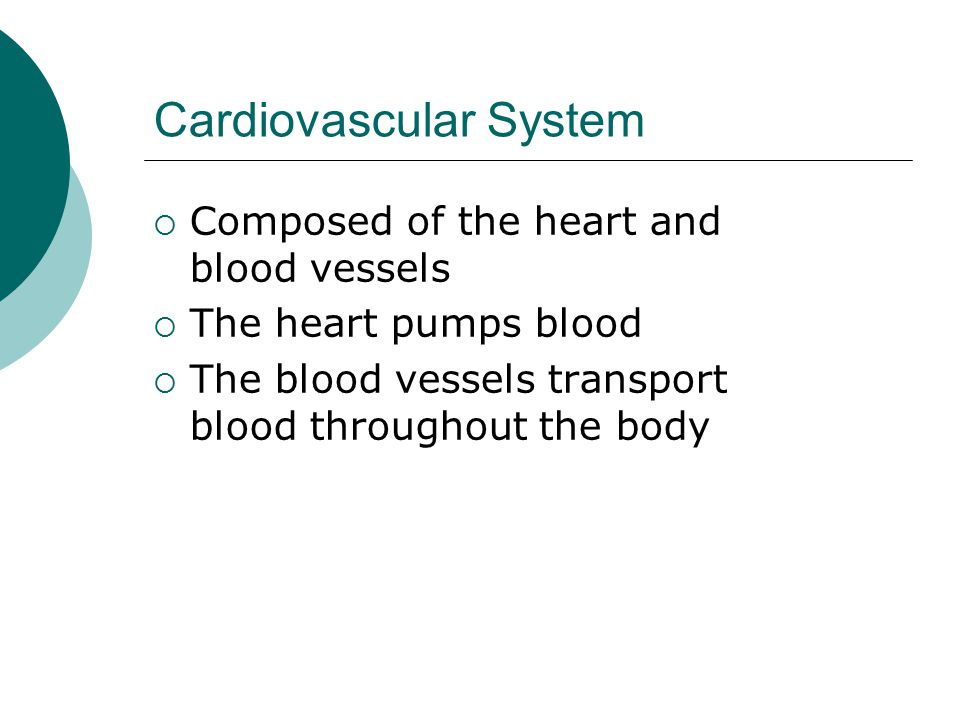 Cardiovascular System  Composed of the heart and blood vessels  The heart pumps blood  The blood vessels transport blood throughout the body