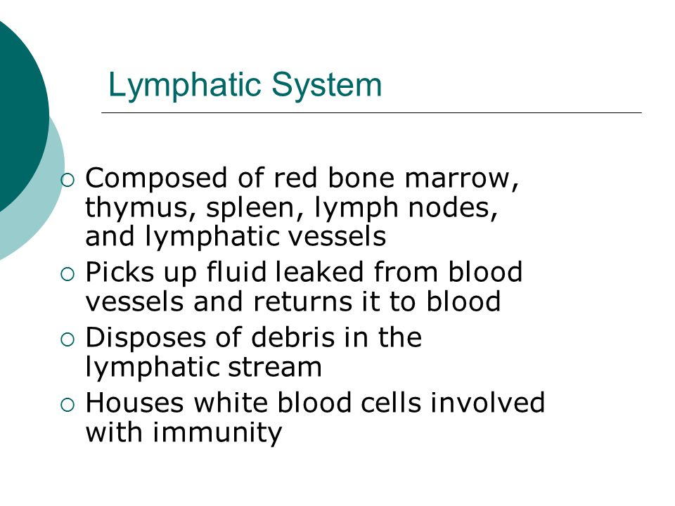 Lymphatic System  Composed of red bone marrow, thymus, spleen, lymph nodes, and lymphatic vessels  Picks up fluid leaked from blood vessels and returns it to blood  Disposes of debris in the lymphatic stream  Houses white blood cells involved with immunity