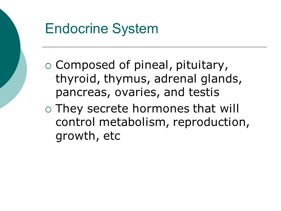 Endocrine System  Composed of pineal, pituitary, thyroid, thymus, adrenal glands, pancreas, ovaries, and testis  They secrete hormones that will control metabolism, reproduction, growth, etc