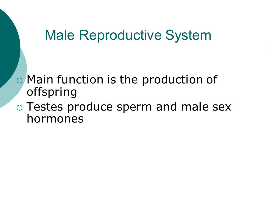 Male Reproductive System  Main function is the production of offspring  Testes produce sperm and male sex hormones