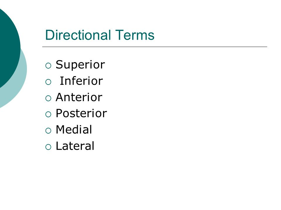 Directional Terms  Superior  Inferior  Anterior  Posterior  Medial  Lateral