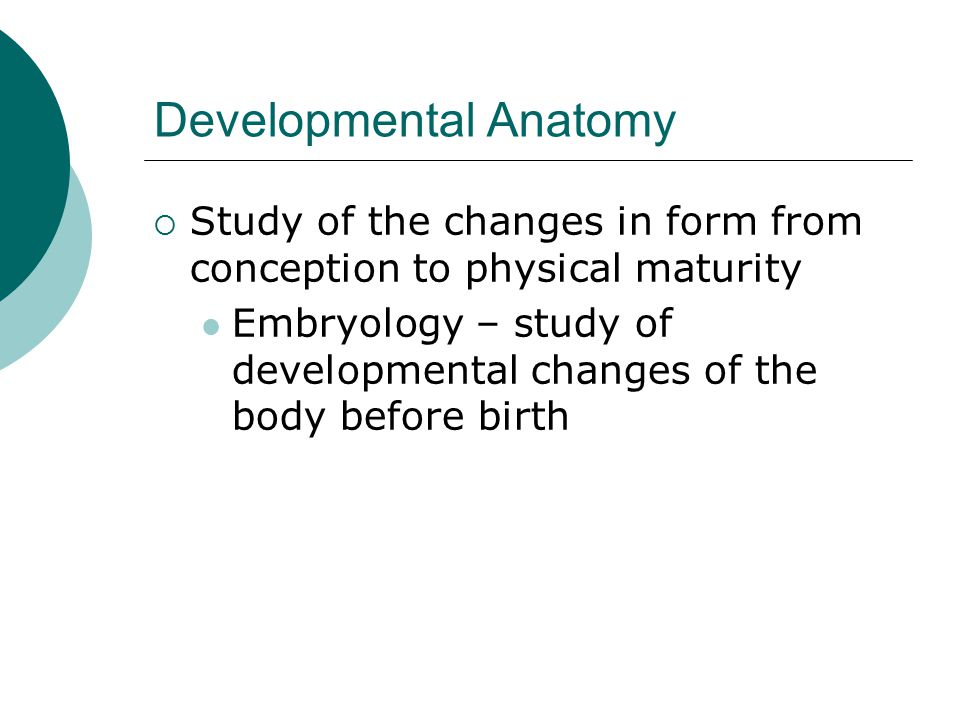 Developmental Anatomy  Study of the changes in form from conception to physical maturity Embryology – study of developmental changes of the body before birth