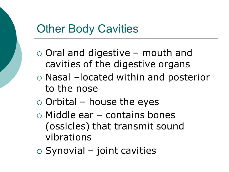 Other Body Cavities  Oral and digestive – mouth and cavities of the digestive organs  Nasal –located within and posterior to the nose  Orbital – house the eyes  Middle ear – contains bones (ossicles) that transmit sound vibrations  Synovial – joint cavities