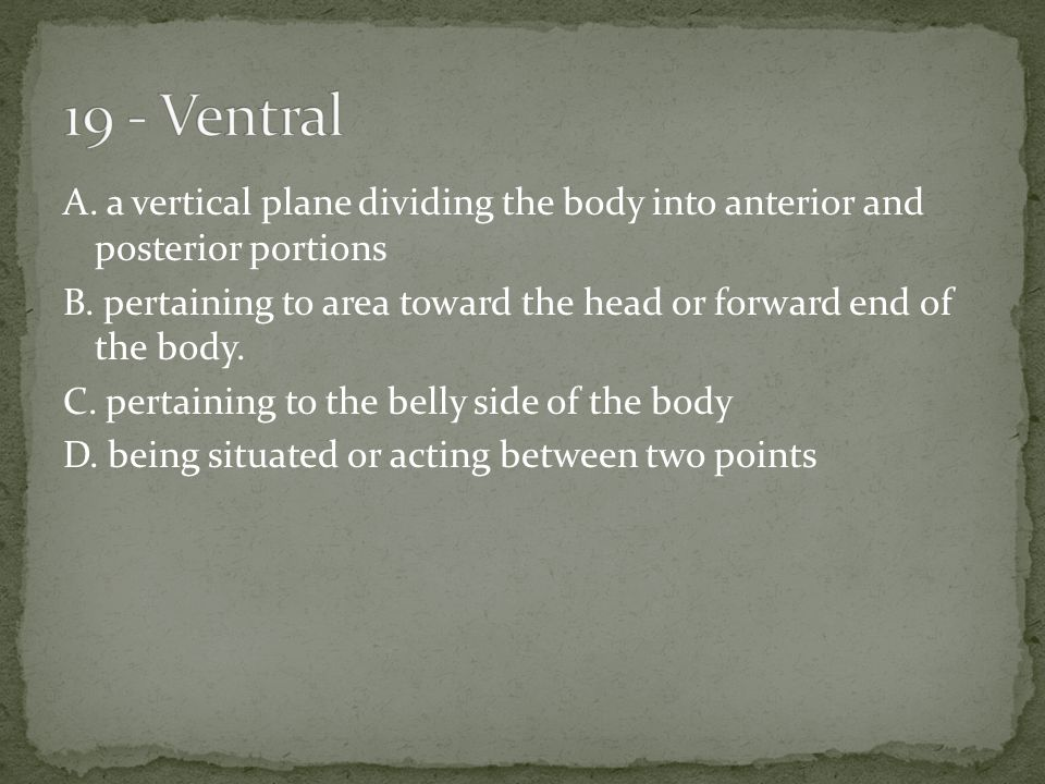 A. a vertical plane dividing the body into anterior and posterior portions B.