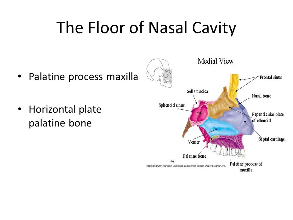 The Floor of Nasal Cavity Palatine process maxilla Horizontal plate palatine bone