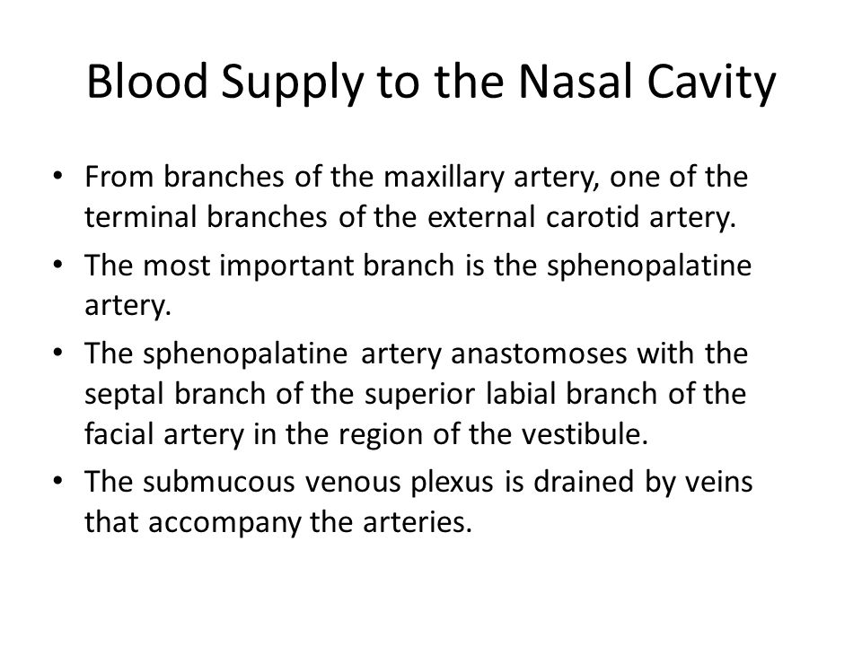 Blood Supply to the Nasal Cavity From branches of the maxillary artery, one of the terminal branches of the external carotid artery. The most importan
