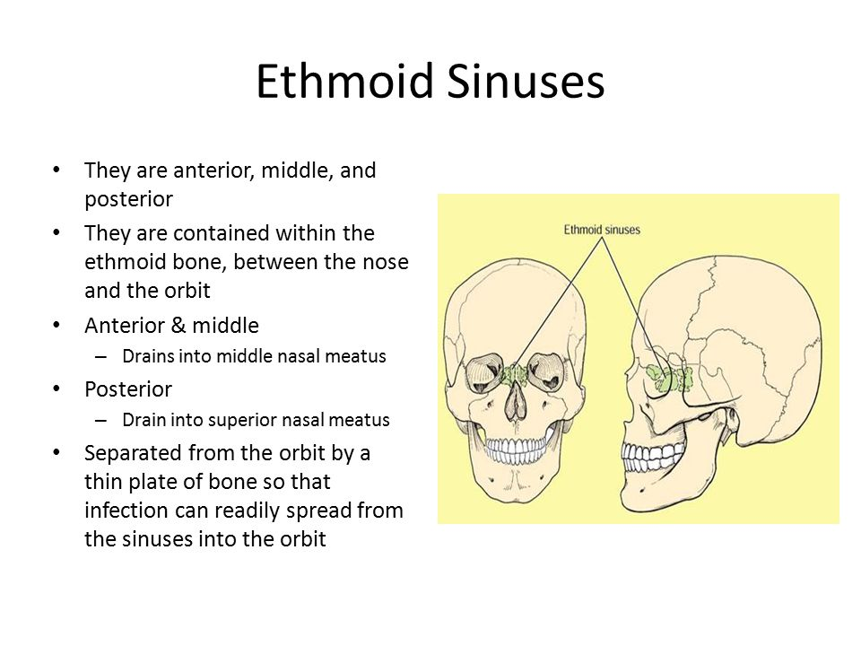 Ethmoid Sinuses They are anterior, middle, and posterior They are contained within the ethmoid bone, between the nose and the orbit Anterior & middle