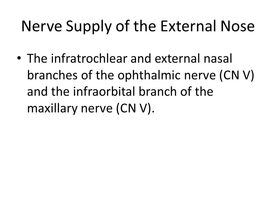 Nerve Supply of the External Nose The infratrochlear and external nasal branches of the ophthalmic nerve (CN V) and the infraorbital branch of the max
