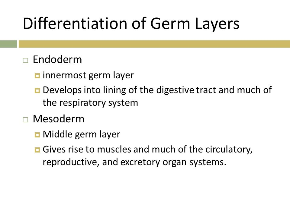 Differentiation of Germ Layers  Endoderm  innermost germ layer  Develops into lining of the digestive tract and much of the respiratory system  Me