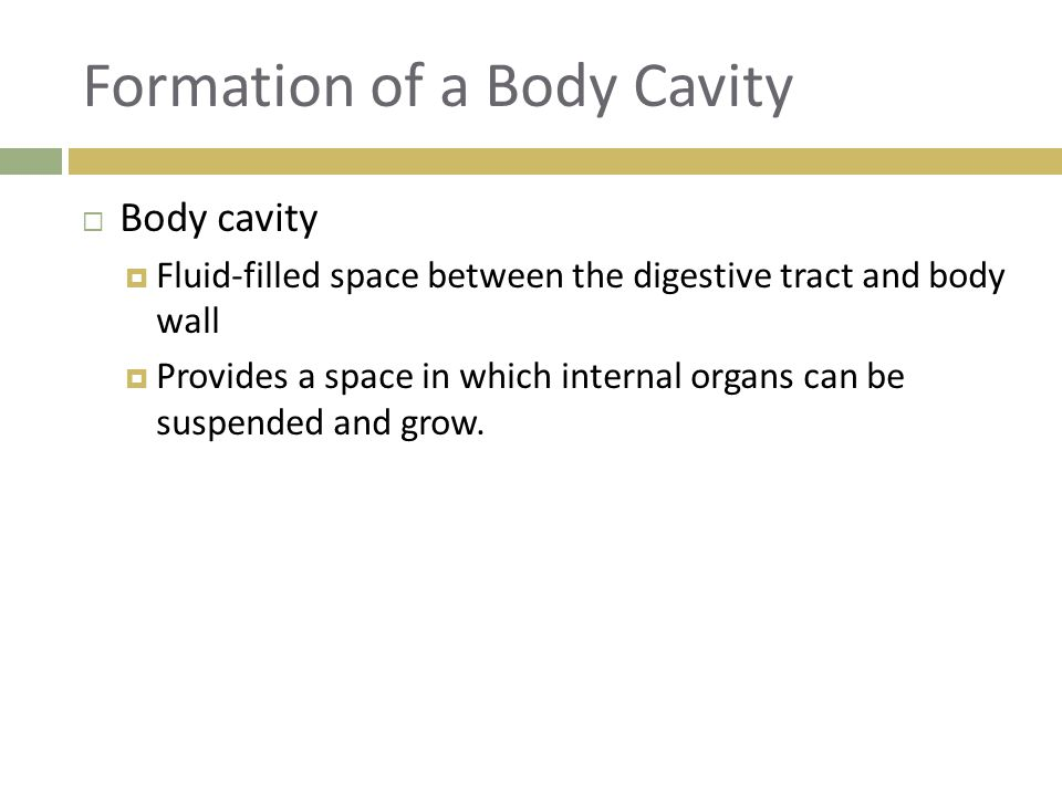 Formation of a Body Cavity  Body cavity  Fluid-filled space between the digestive tract and body wall  Provides a space in which internal organs ca