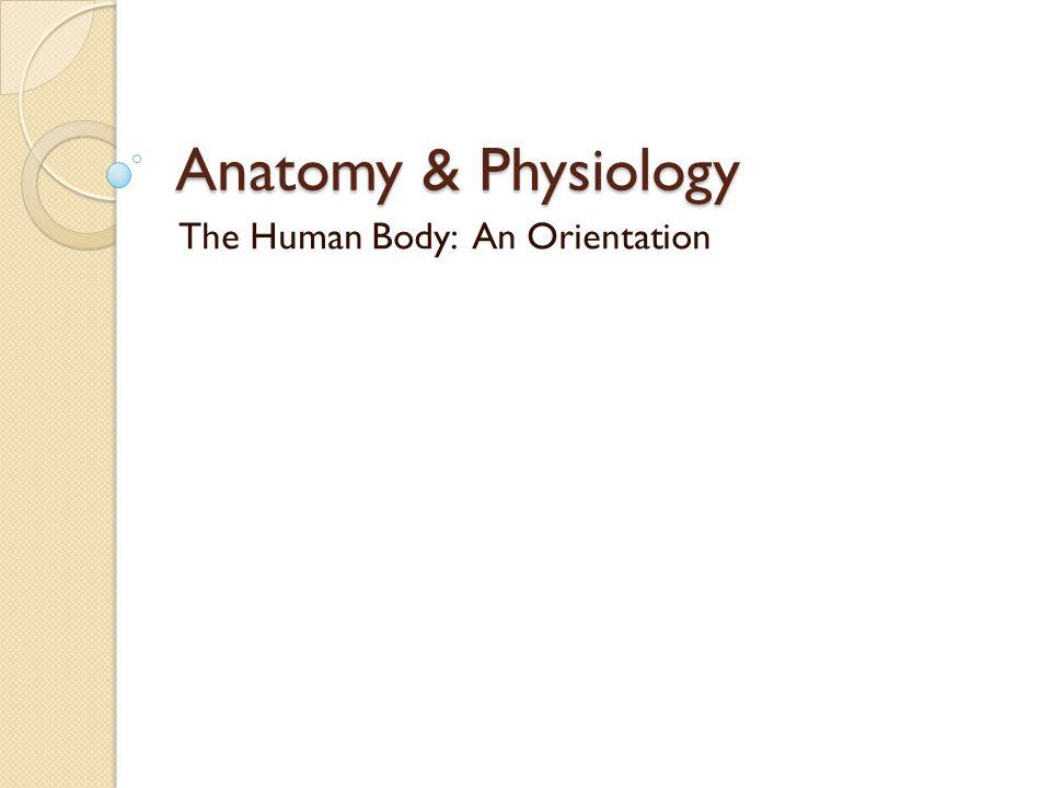 Anatomy & Physiology The Human Body: An Orientation