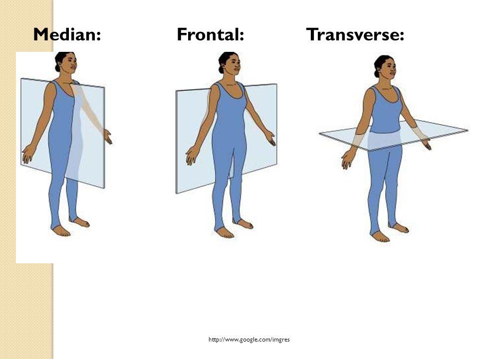 Median:Frontal: Transverse: http://www.google.com/imgres