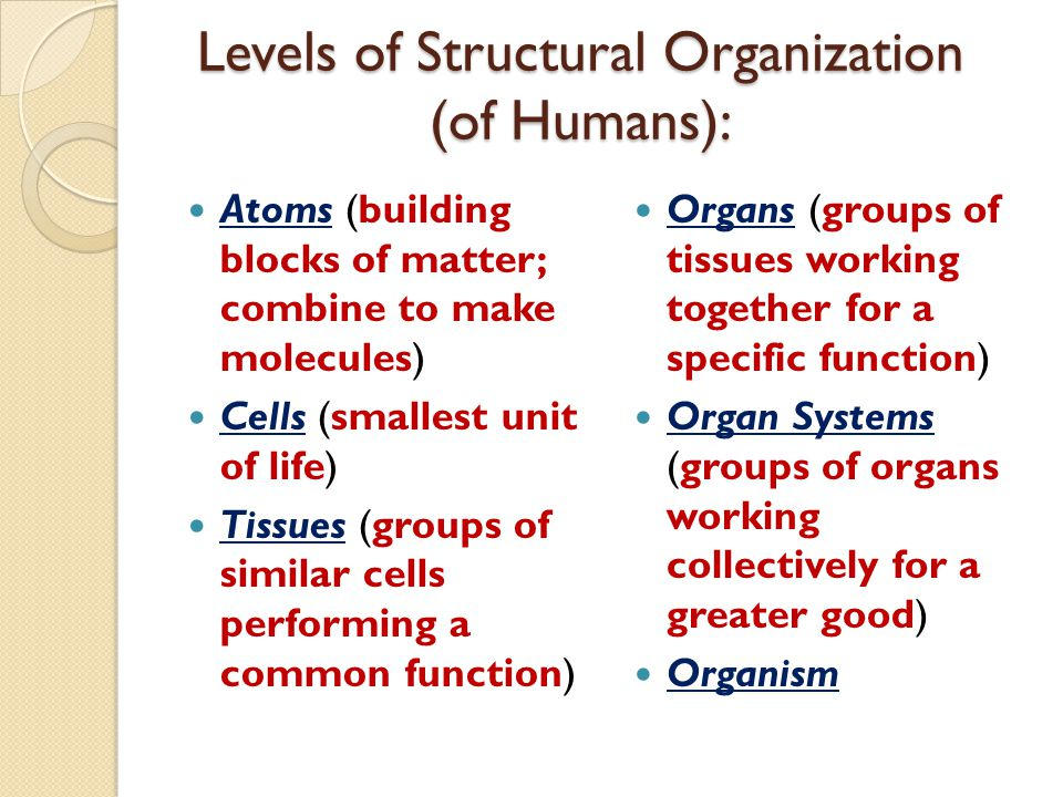 Levels of Structural Organization (of Humans): Atoms (building blocks of matter; combine to make molecules) Cells (smallest unit of life) Tissues (gro