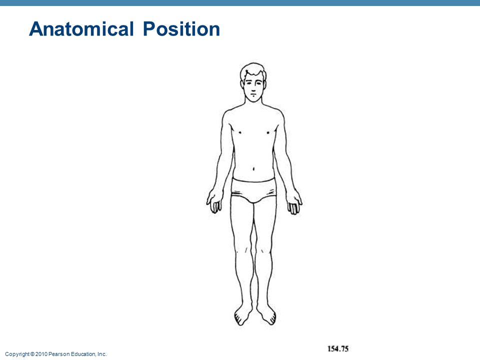 Copyright © 2010 Pearson Education, Inc. Anatomical Position