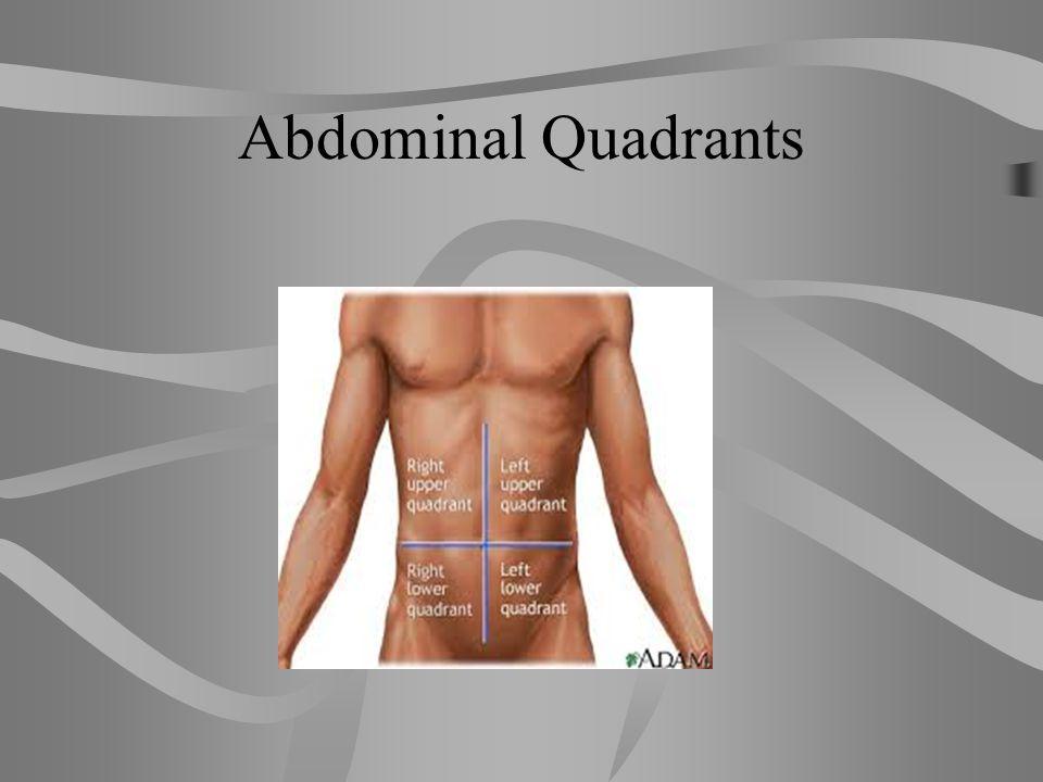 Abdominal Regions: Quadrants 1. Right Upper Quadrant (RUQ) 2. Left Upper Quadrant (LUQ) 3. Right Lower Quadrant (RLQ) 4. Left Lower Quadrant (LLQ)