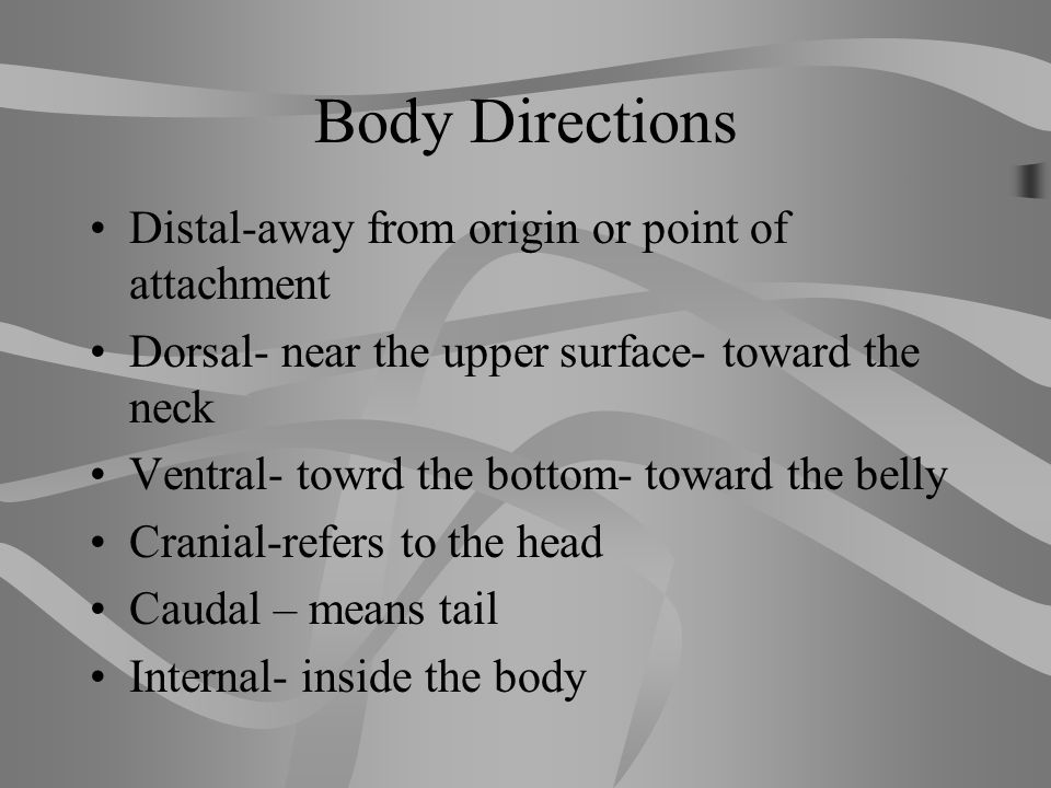 Body Directions Superior – upper or above Inferior- lower or below Anterior or ventral- in front of Posterior- after or behind medial- toward the midl