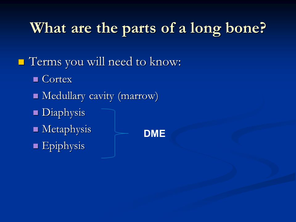 What are the parts of a long bone.