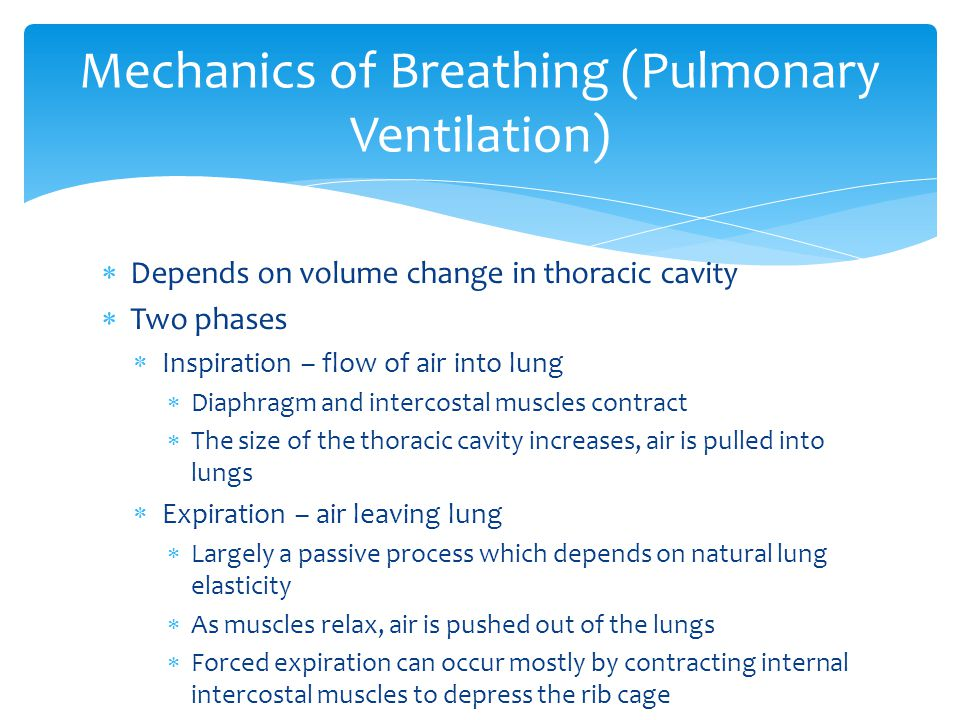  Depends on volume change in thoracic cavity  Two phases  Inspiration – flow of air into lung  Diaphragm and intercostal muscles contract  The si
