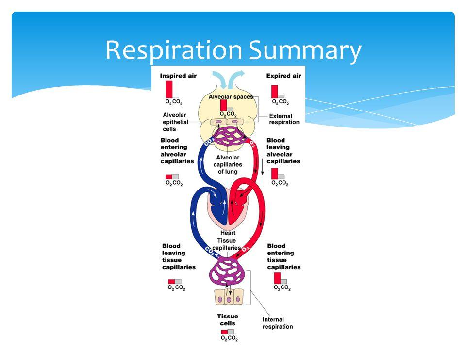 Respiration Summary