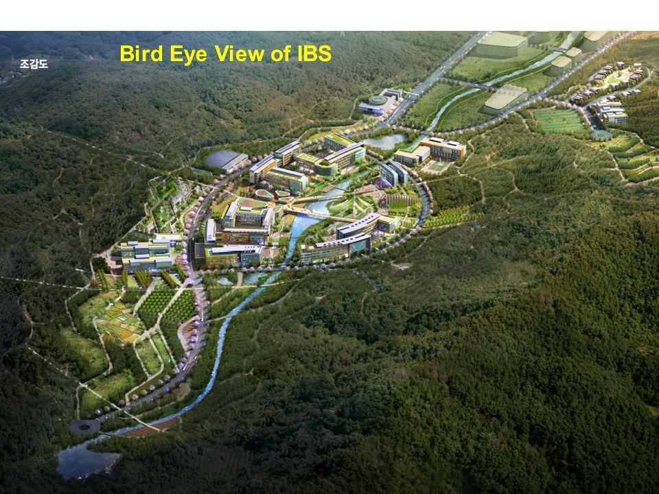 Bird Eye View of IBS
