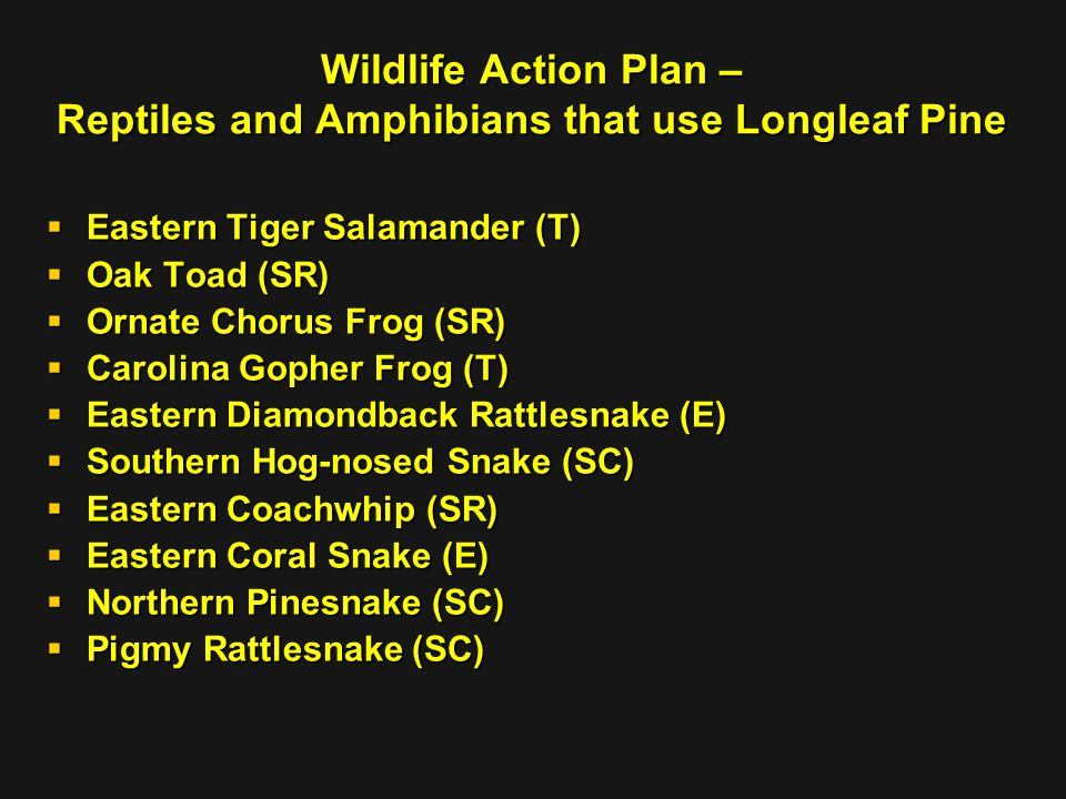 Wildlife Action Plan – Reptiles and Amphibians that use Longleaf Pine  Eastern Tiger Salamander (T)  Oak Toad (SR)  Ornate Chorus Frog (SR)  Carolina Gopher Frog (T)  Eastern Diamondback Rattlesnake (E)  Southern Hog-nosed Snake (SC)  Eastern Coachwhip (SR)  Eastern Coral Snake (E)  Northern Pinesnake (SC)  Pigmy Rattlesnake (SC)