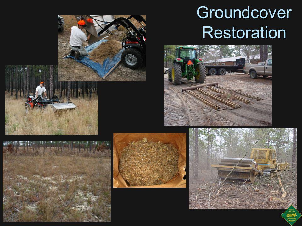 Groundcover Restoration