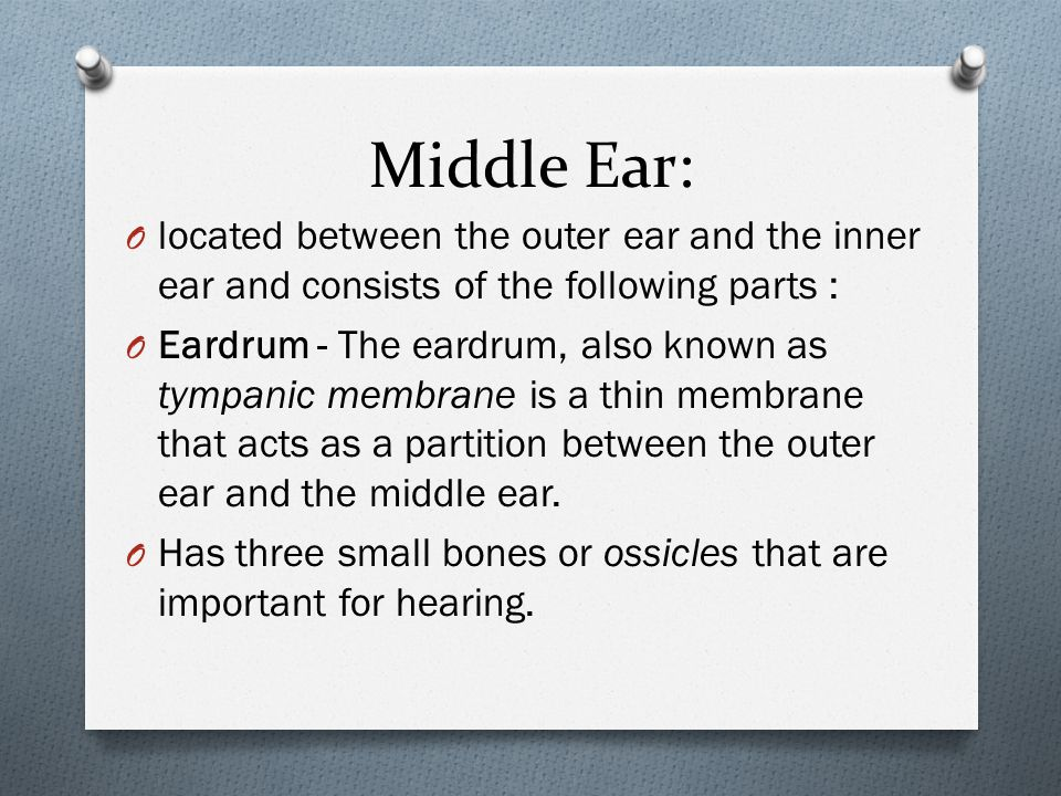 Middle Ear: O located between the outer ear and the inner ear and consists of the following parts : O Eardrum - The eardrum, also known as tympanic membrane is a thin membrane that acts as a partition between the outer ear and the middle ear.